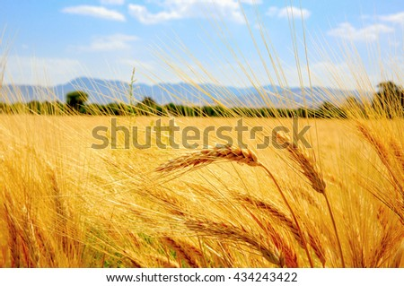 Landscape with ear of wheat field on mountains background