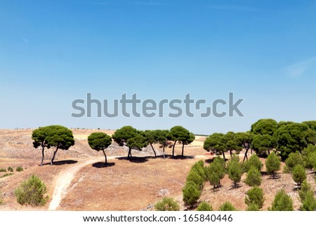 Landscape with fields and a trees, Spain