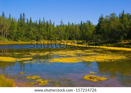 Landscape with forest lake in summer - stock photo