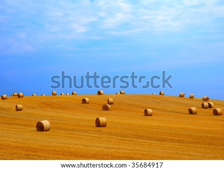 Landscape with golden straw bales - stock photo