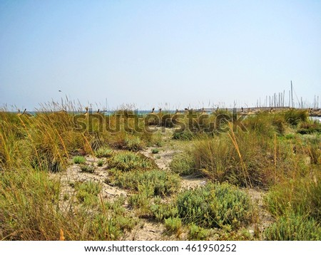Landscape with grass in the dunes, behind the beach, near Es trenc, south Majorca