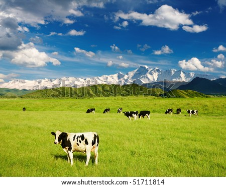 Landscape with grazing calves - stock photo