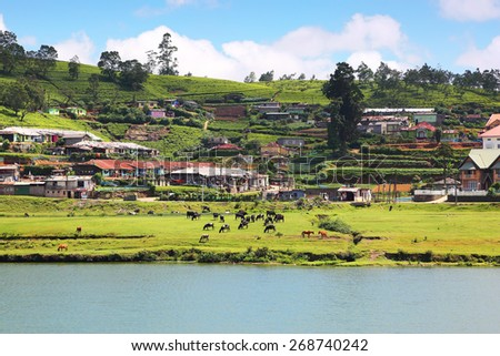 landscape with Gregory lake in Nuwara Eliya - Sri Lanka - stock photo