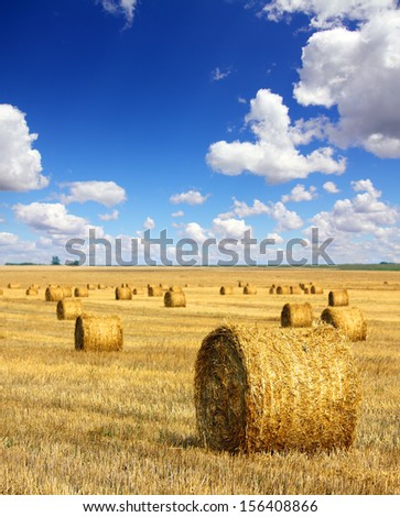 landscape with harvested bales of straw in field  - stock photo