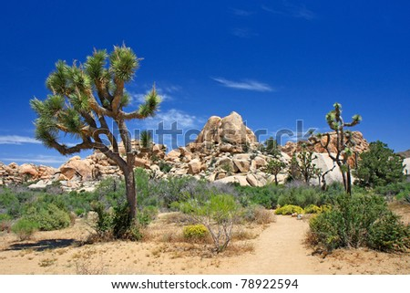 Landscape with joshua tree (Joshua Tree NP) - stock photo