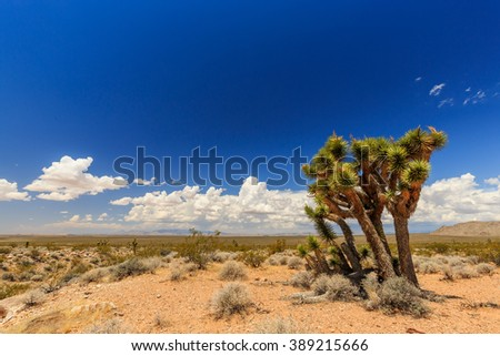 Landscape with Joshua Trees at Joshua Tree Road in the Mojave Desert near Scenic Backway. - stock photo