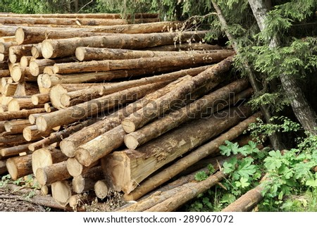 Landscape With Large Woodpile In The Summer Forest From Sawn Old Big Pine And  Spruce De-barked Logs For Forestry Industry