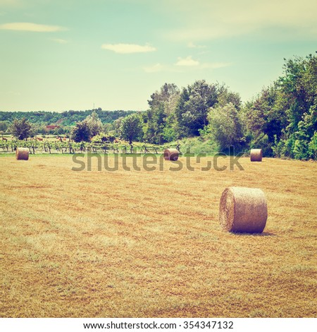 Landscape with Many Hay Bales and Vineyard in Italy, Instagram Effect - stock photo