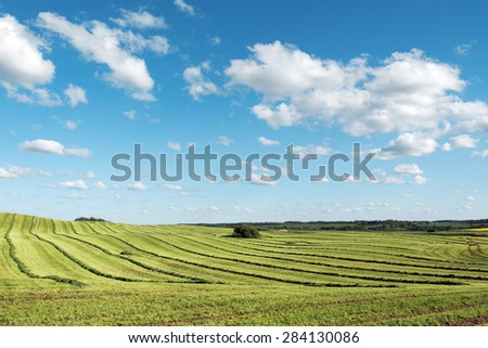 Landscape with mowed field, Latvia.