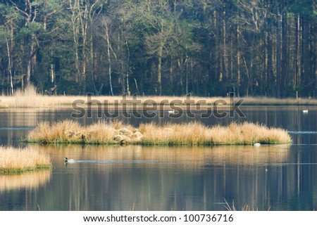 Landscape with nature fen and wild ducks in Dutch forest