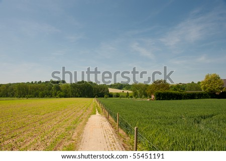 landscape with nature hills and young maize - stock photo