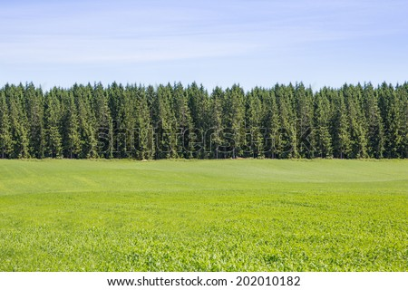 Landscape with pine forests - stock photo