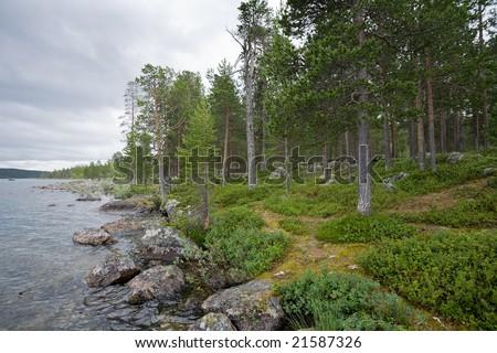 landscape with pine-wood on a stony lake shore - stock photo