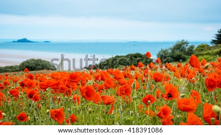 landscape with Red poppy field near sea, Brittany France - stock photo