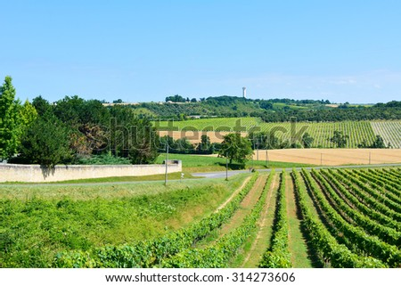 Landscape with rows of vines and wheat field in French countryside