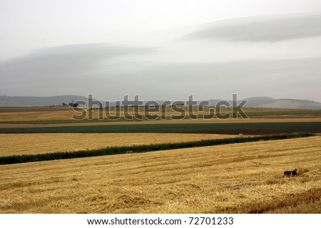 Landscape with rural fields at hot summer