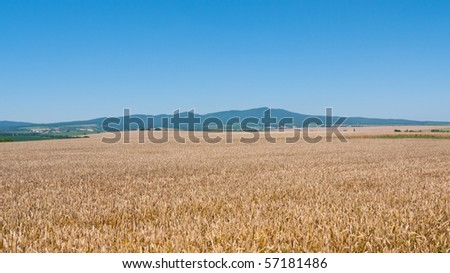 Landscape with rye field and mountains against background