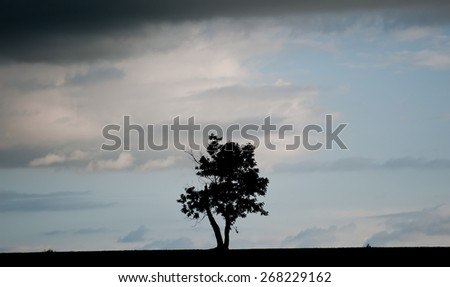landscape with single tree in the evening sky, spring season