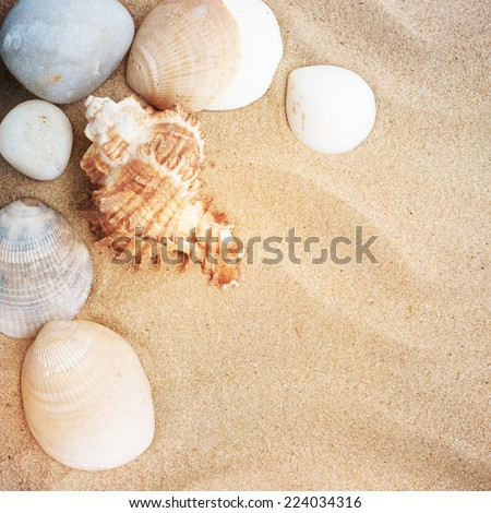 Landscape with stones and shells on tropical beach