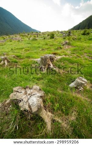 Landscape with stumps left after deforestation - stock photo