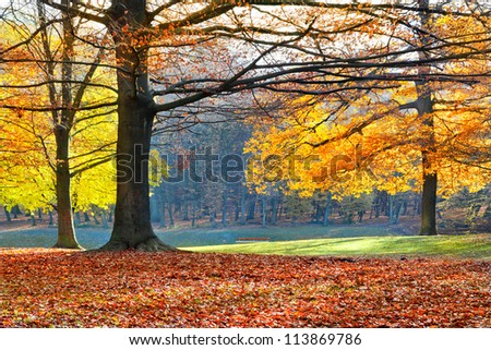 Landscape with the autumn forest. Bright colors of autumn leaves in the park. Lonely beautiful autumn tree. Old tree. - stock photo
