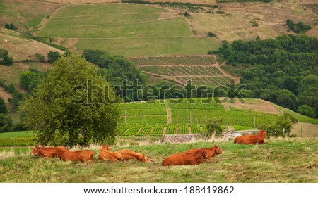 Landscape with the view to Beaujolais vineyards, France - stock photo