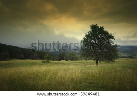 landscape with tree dramatic sky fog and beautiful autumn colors - stock photo