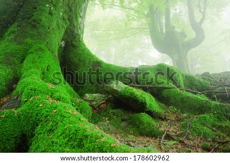 landscape with tree roots with moss on forest - stock photo