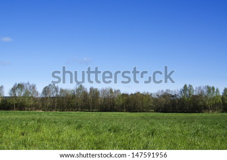 landscape with trees and blue sky in the background - stock photo
