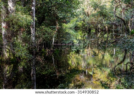 Landscape with view of Cypress trees growing in Sweetwater Strand of the Big Cypress National Preserve, just north of the  Florida Everglades. A strand is a natural overflow in the landscape. - stock photo