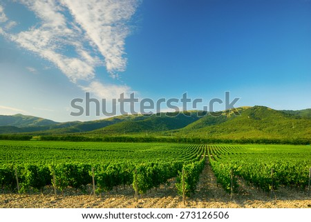 Landscape with vineyard in the mountains