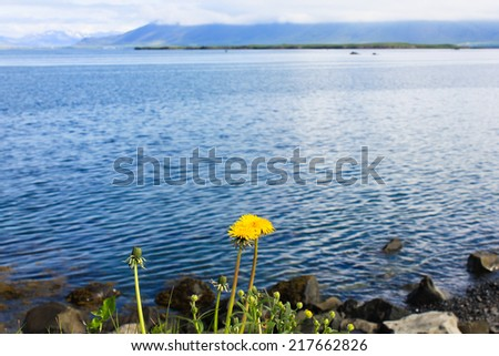 Landscape with water and a dandelion - stock photo