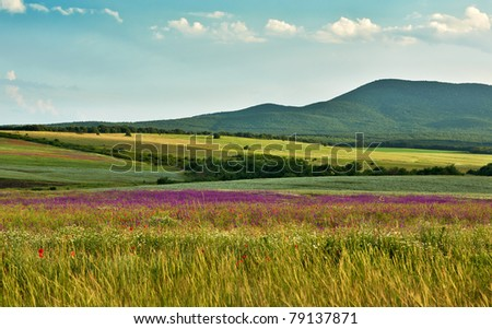 Landscape with wild spring flowers of the field blossoms - stock photo