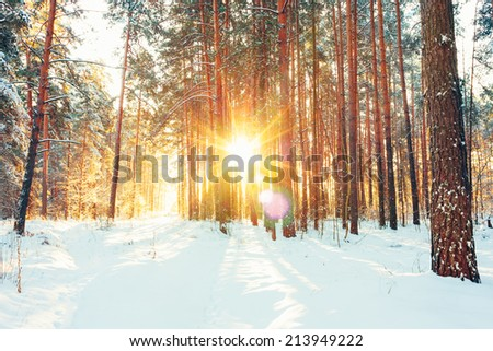 Landscape with winter forest and bright sunbeams. Sunrise, sunset in cold snowy forest - stock photo