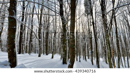 landscape with wood with snow in winter - stock photo