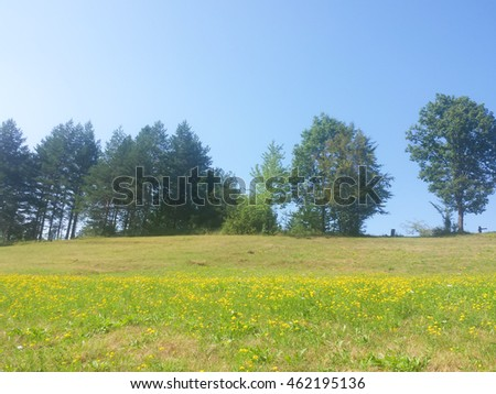 Landscape-yellow meadow,trees and a clear blue sky