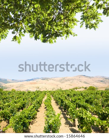 landscaped for vineyard and white clouds in blue sky - stock photo