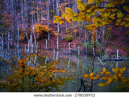 landscapes colors tree green forest leaf nature sunlight - stock photo