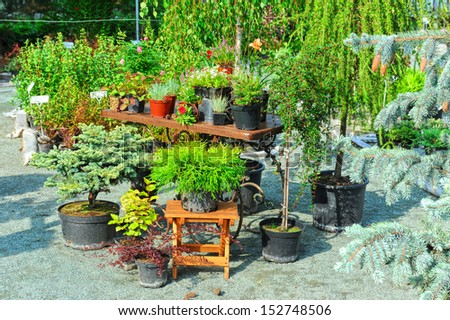 Typical italian street small provincial town stock photo for Typical landscaping plants