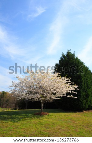 Landscaping in the spring of a typical American Suburban neighborhood. - stock photo