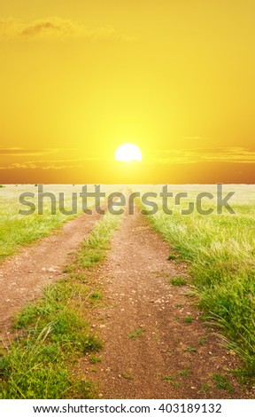 Lane in green meadow on sunset. Nature composition. - stock photo