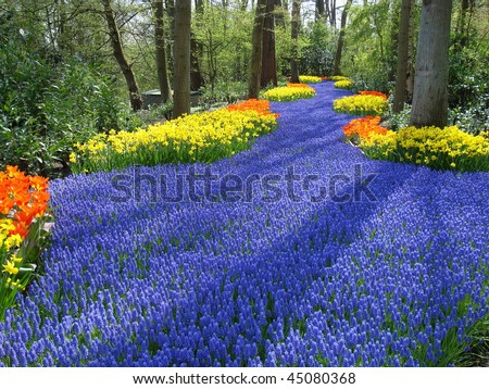 Lane of colorful spring flowers in dutch spring garden  (Keukenhof, the Netherlands) - stock photo