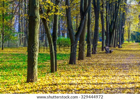 Lane of Tree Trunks near Road with Benches and Fallen Yellow and Dry Foliage in Autumn Park - stock photo
