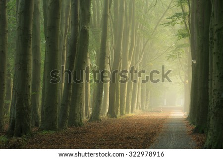 Lane of trees during a foggy morning in early autumn. - stock photo
