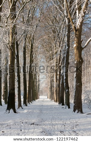 Lane with beech trees at Groeneveld Estate in winter (Baarn, the Netherlands). Look also for the fall, spring and summer version of this location. Files: 122197468, 138936659 and 157894688 - stock photo