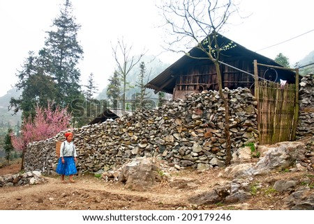 LAO CAI, VIETNAM, January 4: the northern mountainous province of Lao Cai, Vietnam spring blooming cherry trees on beautiful 4, 2014 in Sa Pa, Lao Cai, Vietnam. Hmong woman back home - stock photo