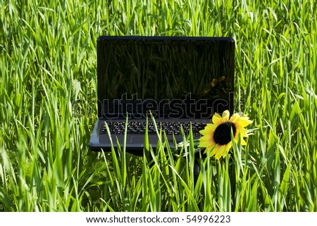 laptop in green grass with a sunflower - stock photo