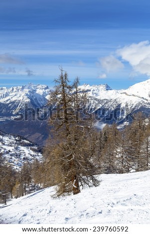 Larch on the background of a mountain village, Tzoumaz, Switzerland - stock photo