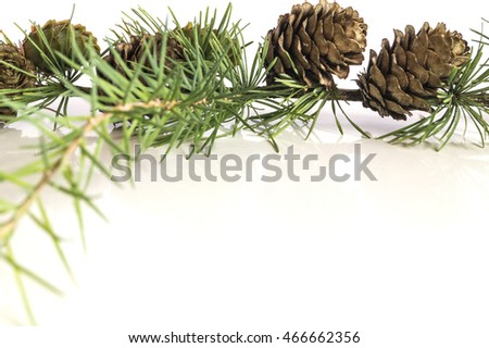 Larch tree branch and cones