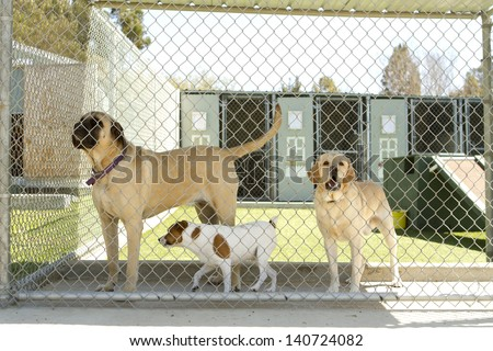 Large and small dogs in a pet boarding facility. - stock photo